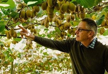 Studio sulla moria del kiwi: istituita una task force