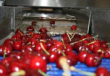 Agrintesa: la ciliegia come frutto sempre più innovativo