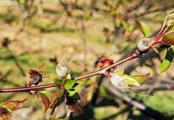 Frutta estiva: le perdite ammontano a 862 milioni di euro