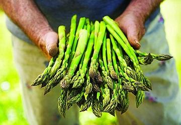 Brio, arrivano in Gdo gli asparagi verdi bio 100% italiani