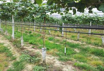 Irrigazione: scienza e tecnica per un miglioramento continuo