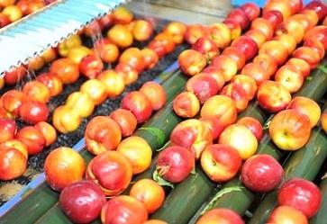 Promozione della frutta estiva